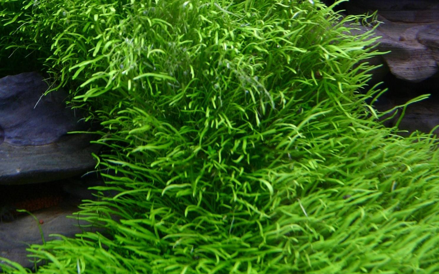In Vitro Planzen Bonsai Garnelen Aquaristik Wettstein Alles Rund