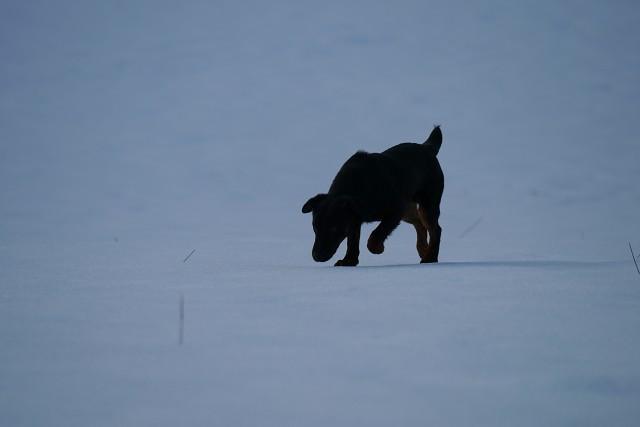 auf verharschter Schneedecke