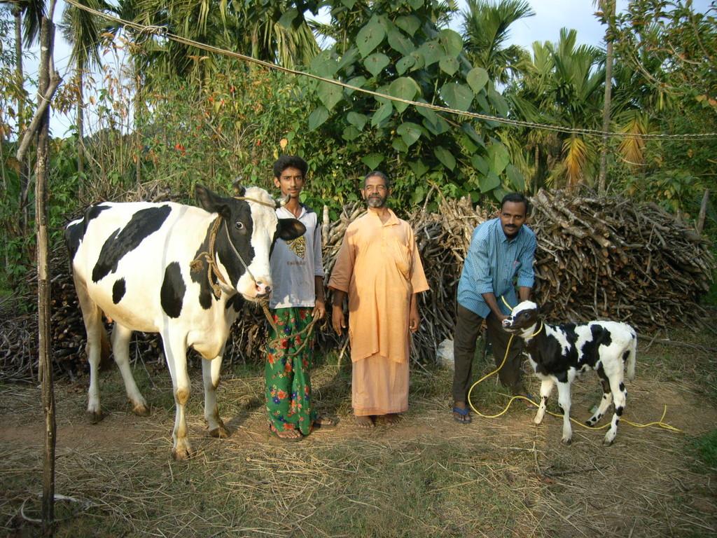 Kreuzung einer deutschen mit eine indischen Kuhrasse, die den Milchertrag vervielfacht.