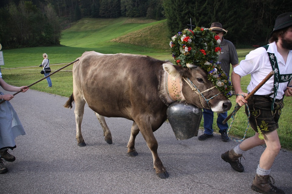 Allgäuer Viehscheid
