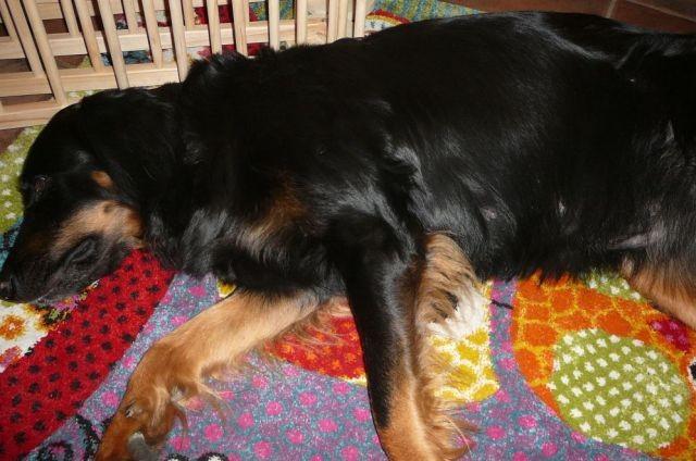 Fara und ihr Teppich