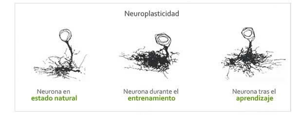 Neuroplasticidad. Como entrenar nuestro cerebro y transformarlo.