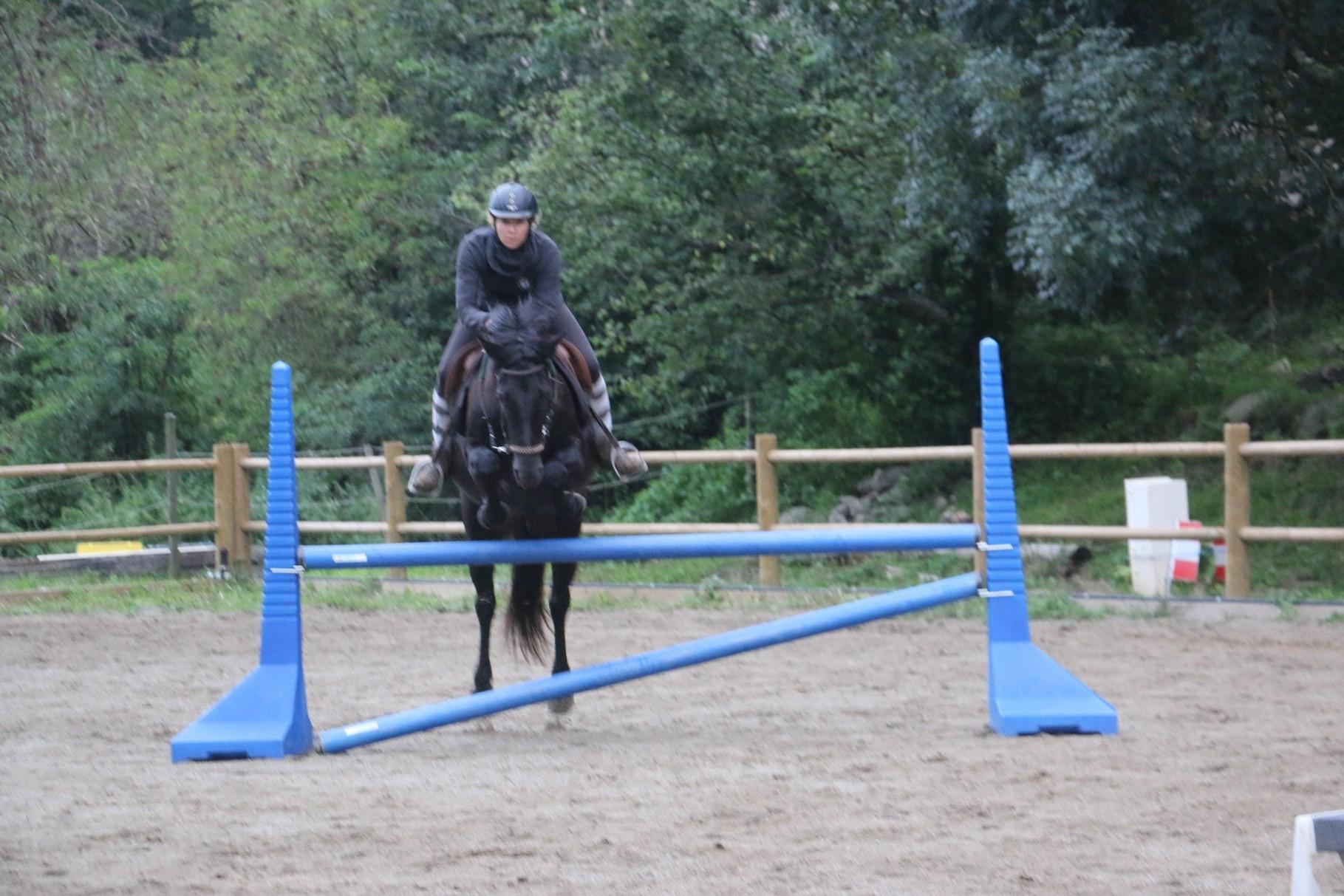 Démonstaration d'obstacles cheval de mérens