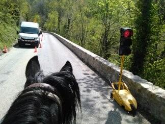 Nos chevaux bien sages au feu rouge...