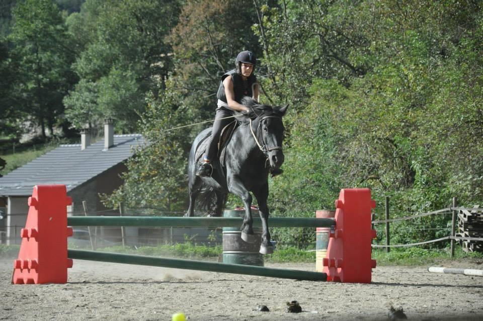 Cours d'obstacles cheval de merens