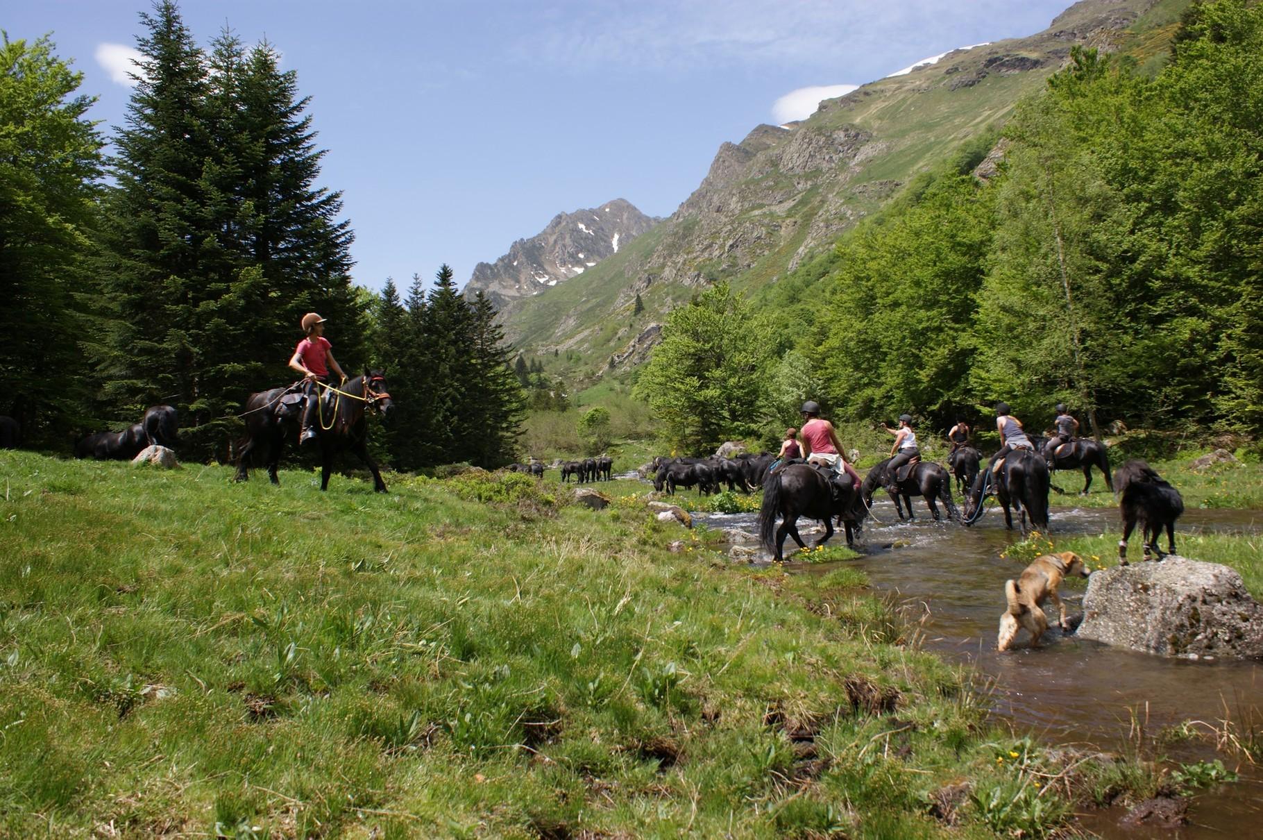 L'arrivée avec le troupeau