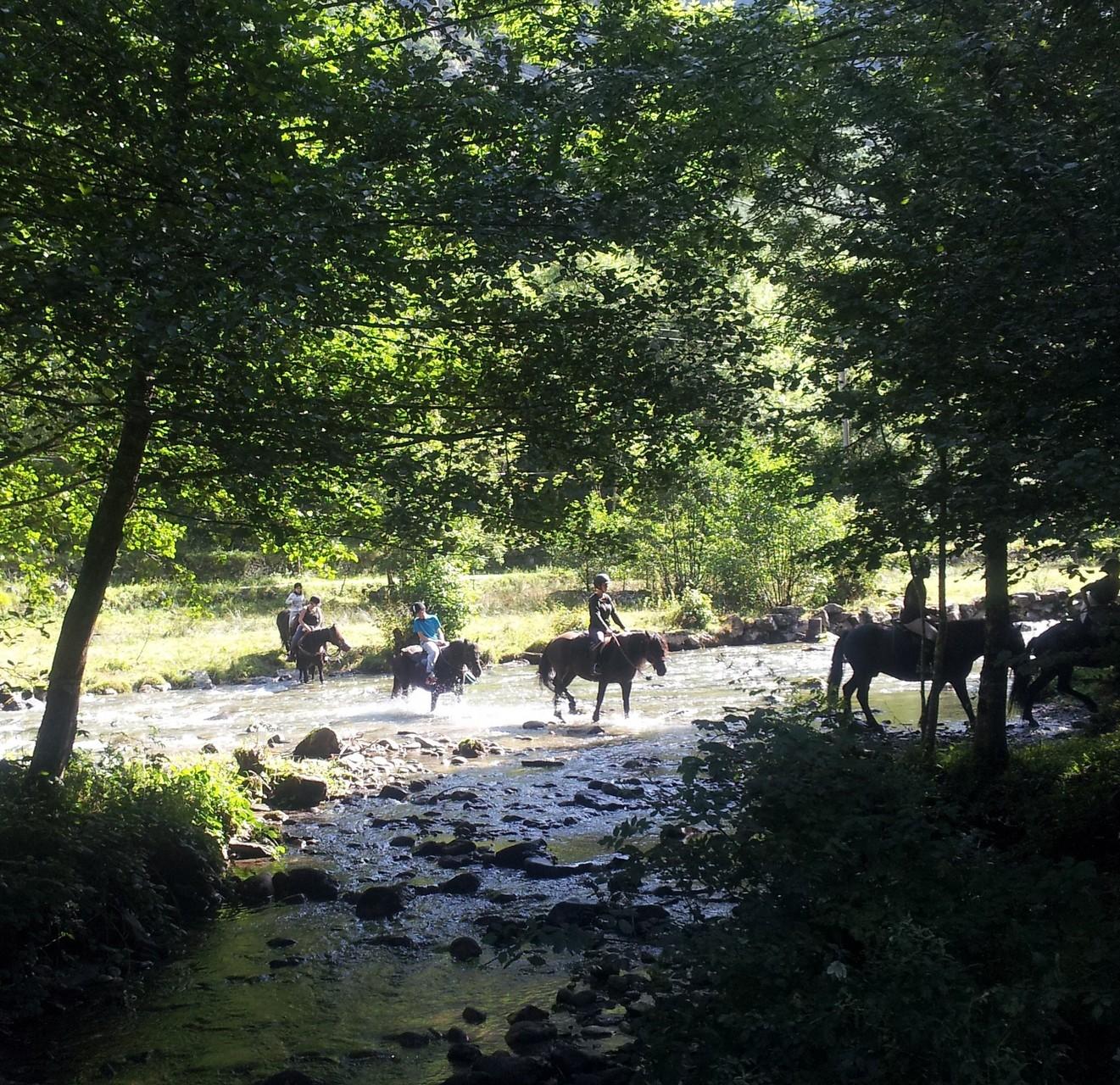 La rivière parcourt la vallée, l'occasion de familiariser les chevaux à l'eau.