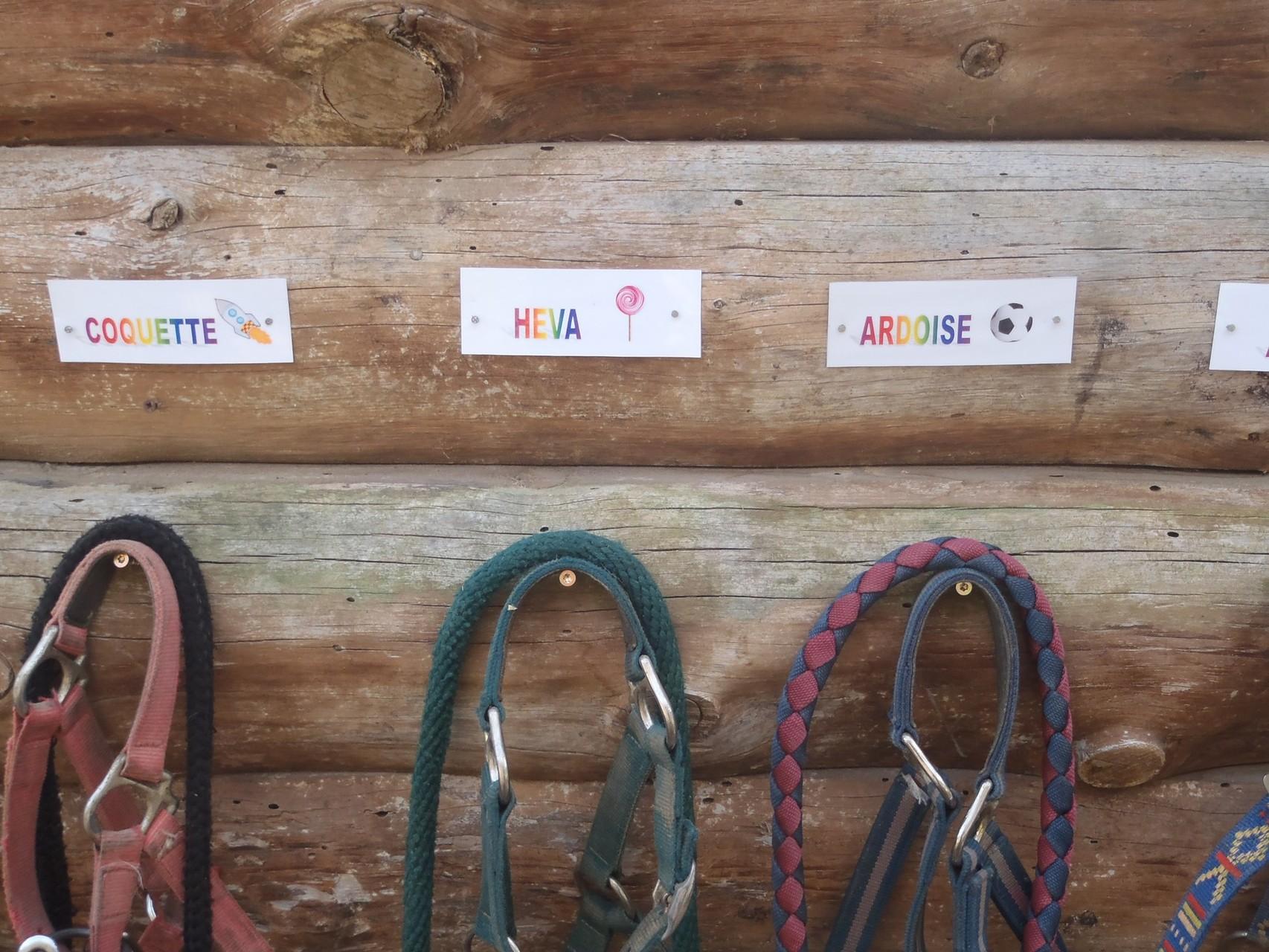 le rangement du matériel poney, adapté aux petits