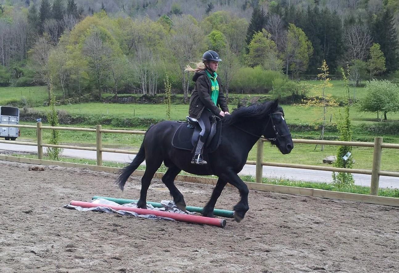 Leçon d'équitation en carrière