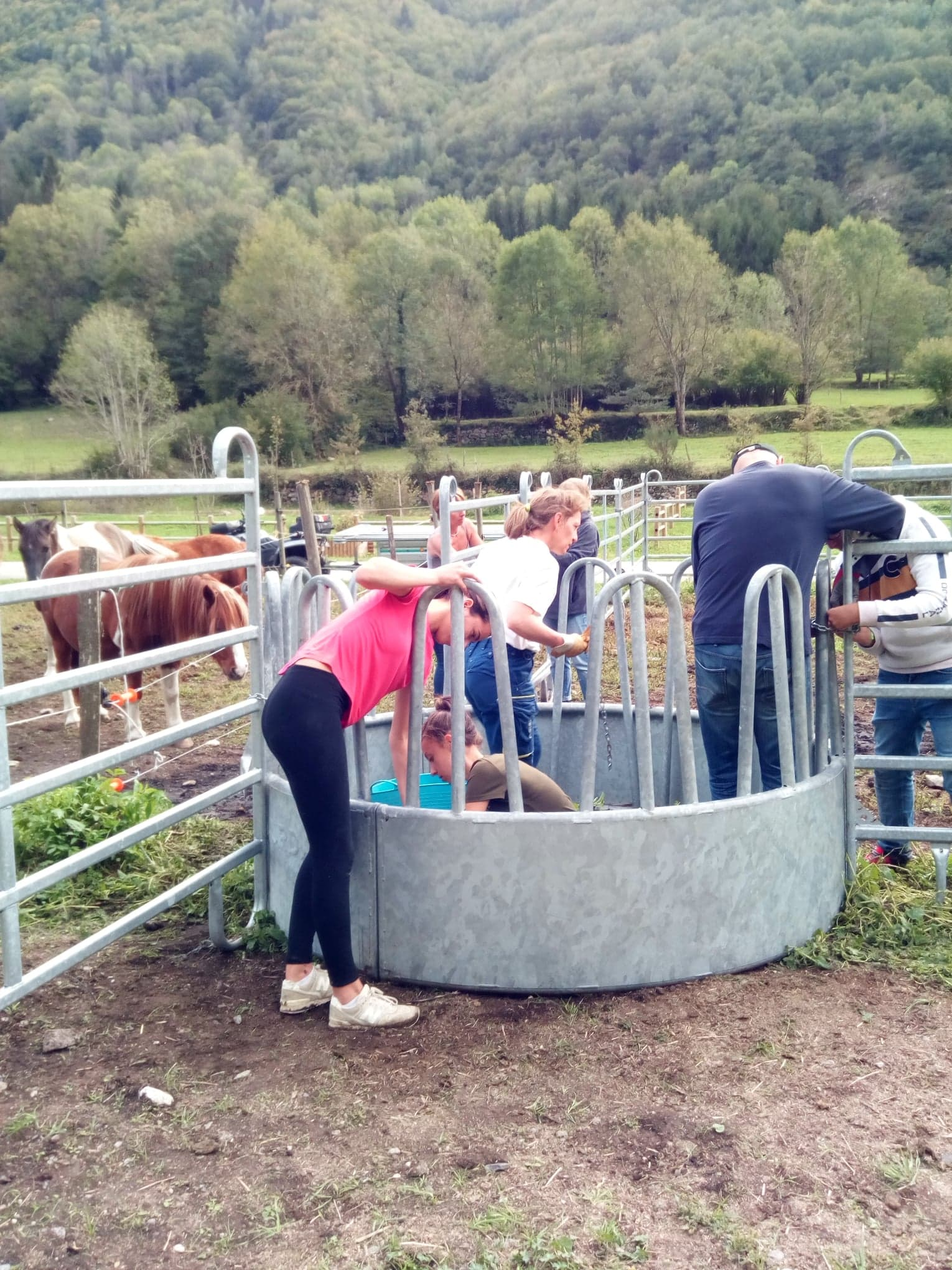 travaux annexes : mise en place d'un râtelier dans les nouveaux paddocks poney