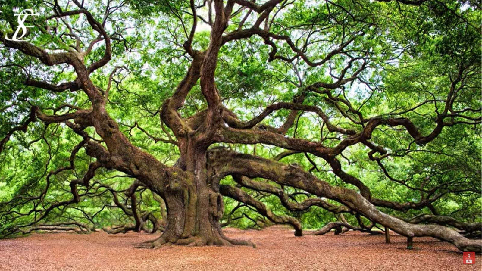 Méditation de l'arbre : Ancrage Terre - Ciel - Être Soi