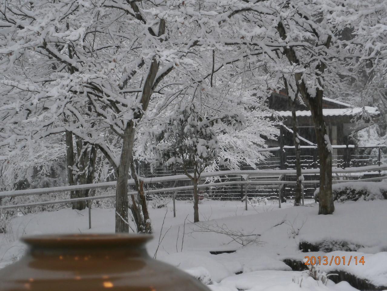 レストラン前の池も凍っています