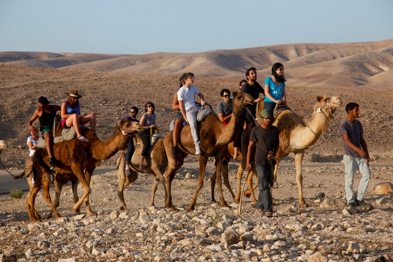 Chameaux dans le Negev