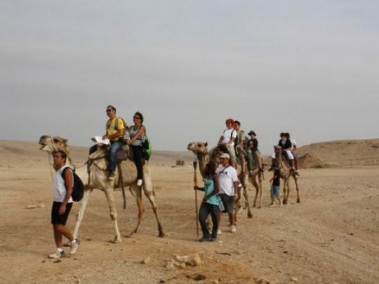 Ovdat- chameaux