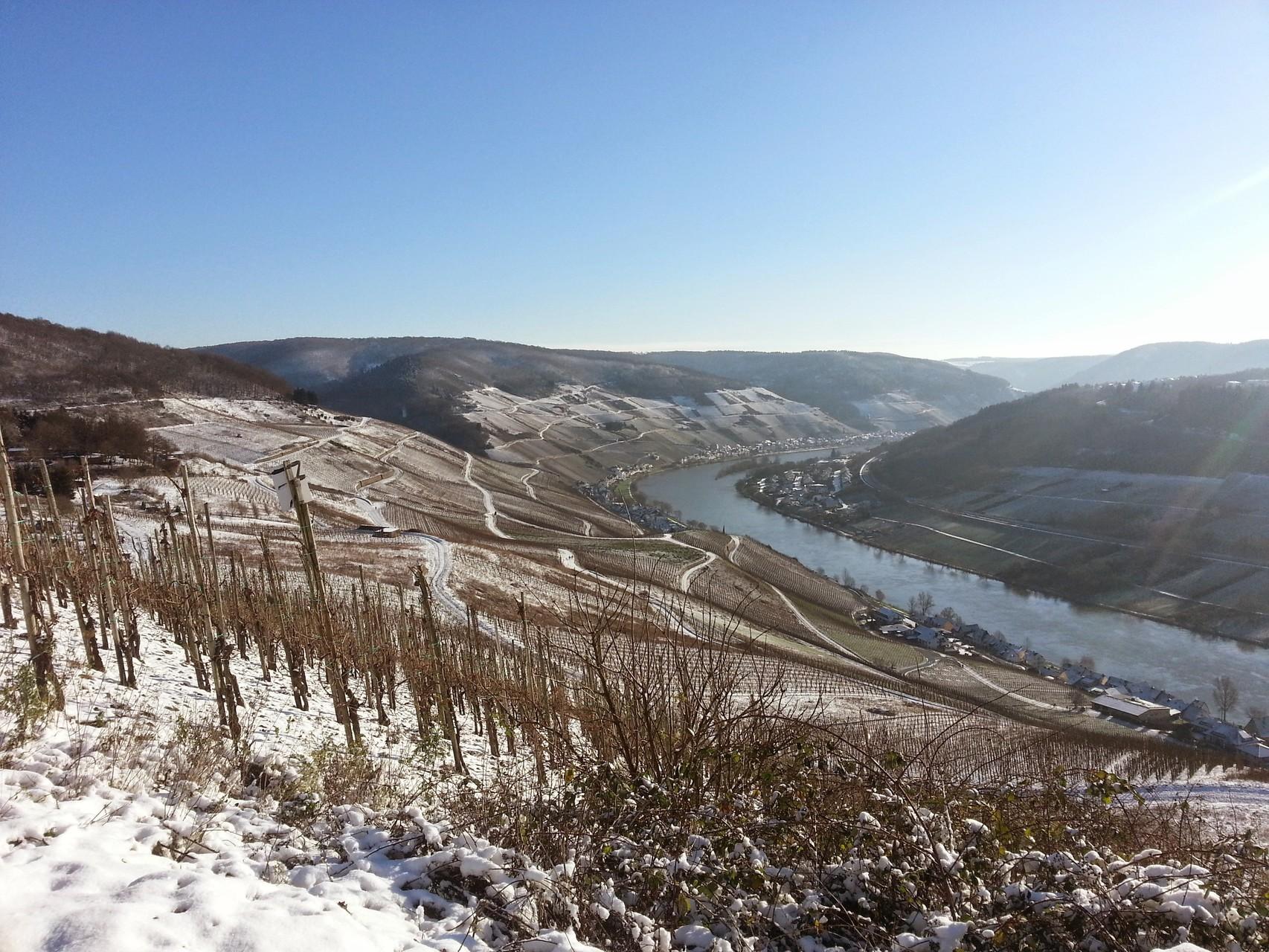 Schneebedeckte Weinberge