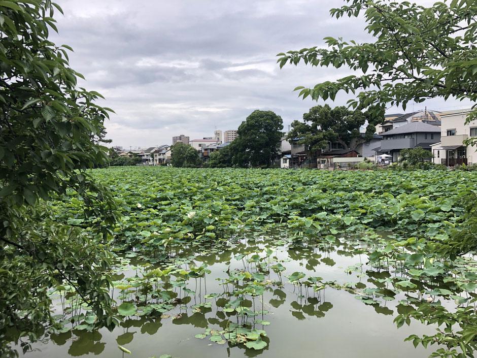 桃が池のいえ 温湿度調査・工事契約【設計監理】