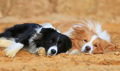 Lucy und Duke (Bild von Kathrin Pfundi)