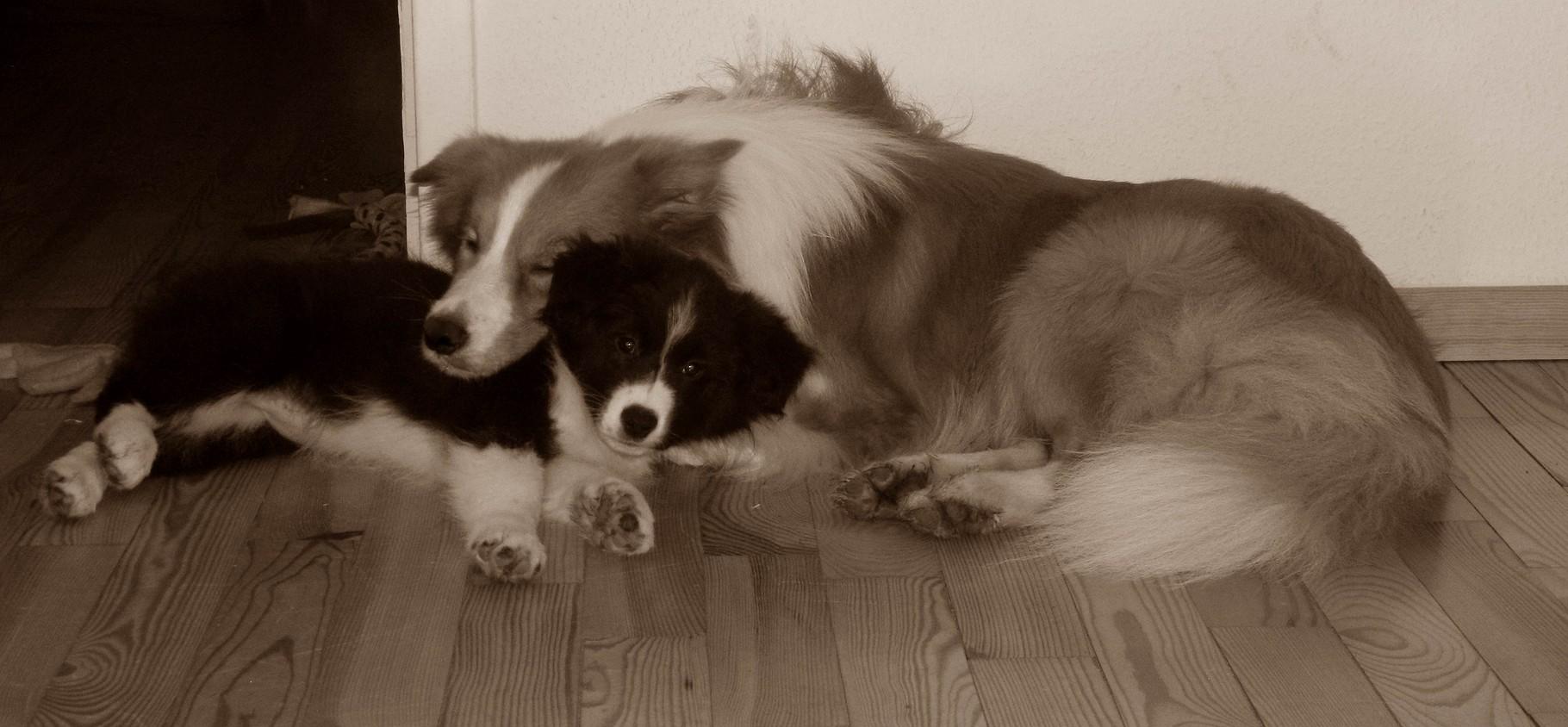 Lucy und Duke beim Kuscheln