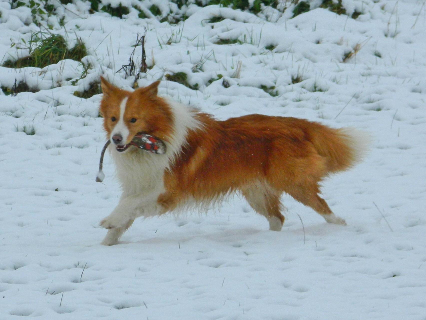 Der erste Schnee im Saarland Winter 2014