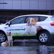 Duke als Werbemodel für Luposan auf dem Auto und dem Futter ;)