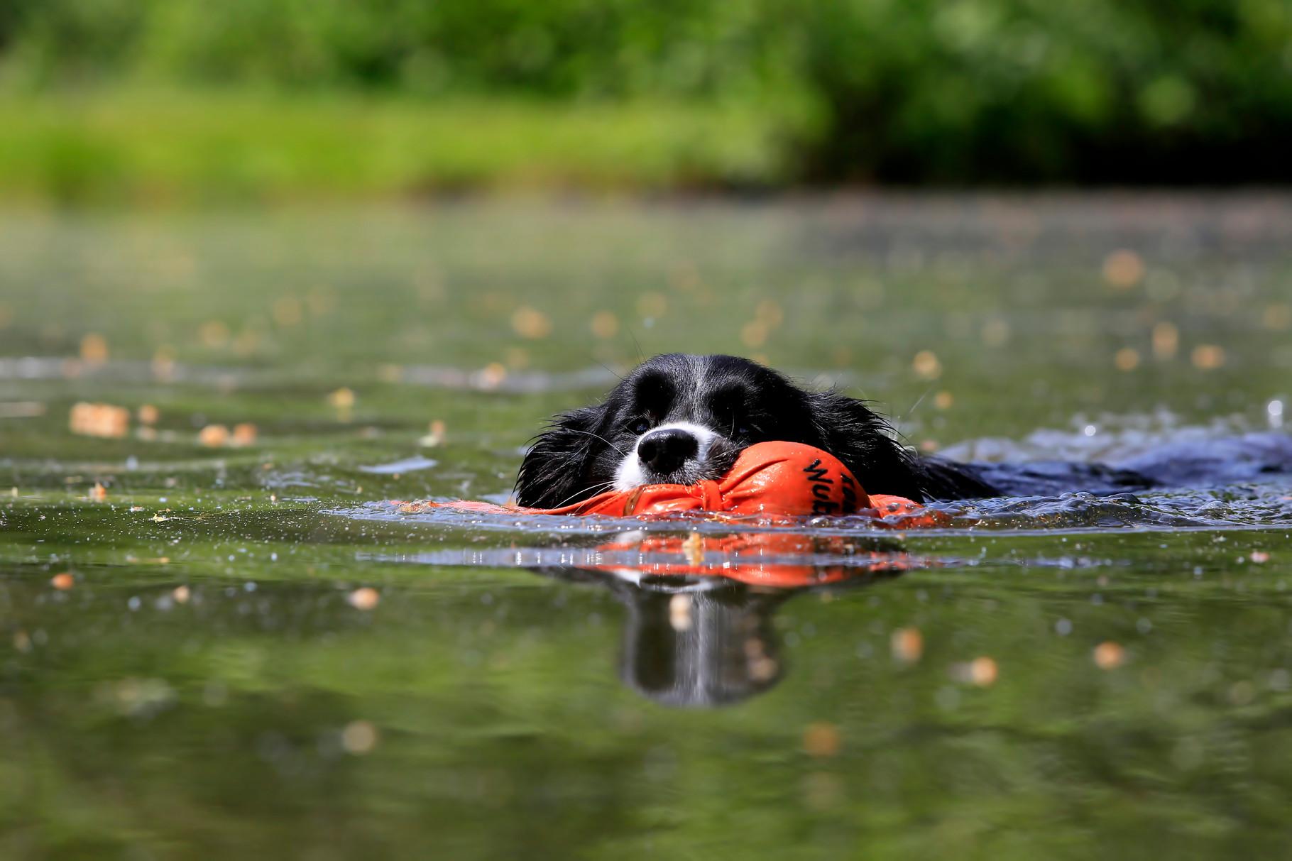 Lucy beim Schwimmen. Foto von K. Pfundi