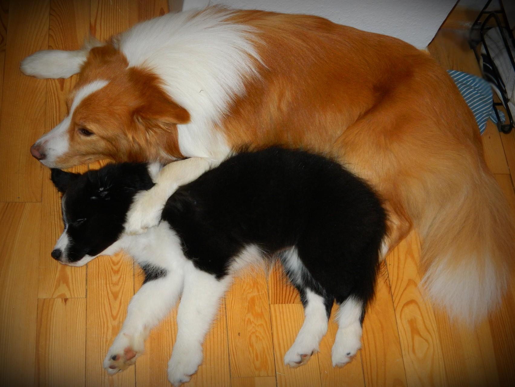Duke und Lucy (10 Wochen)