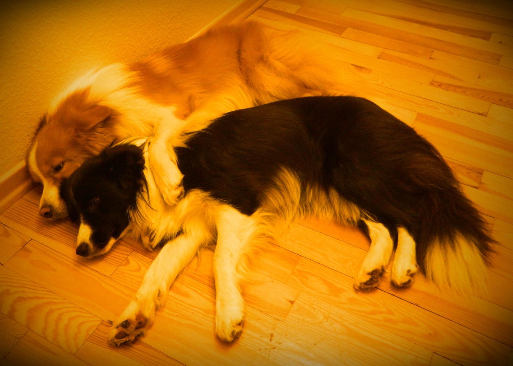 Duke und Lucy( 1 Jahr)