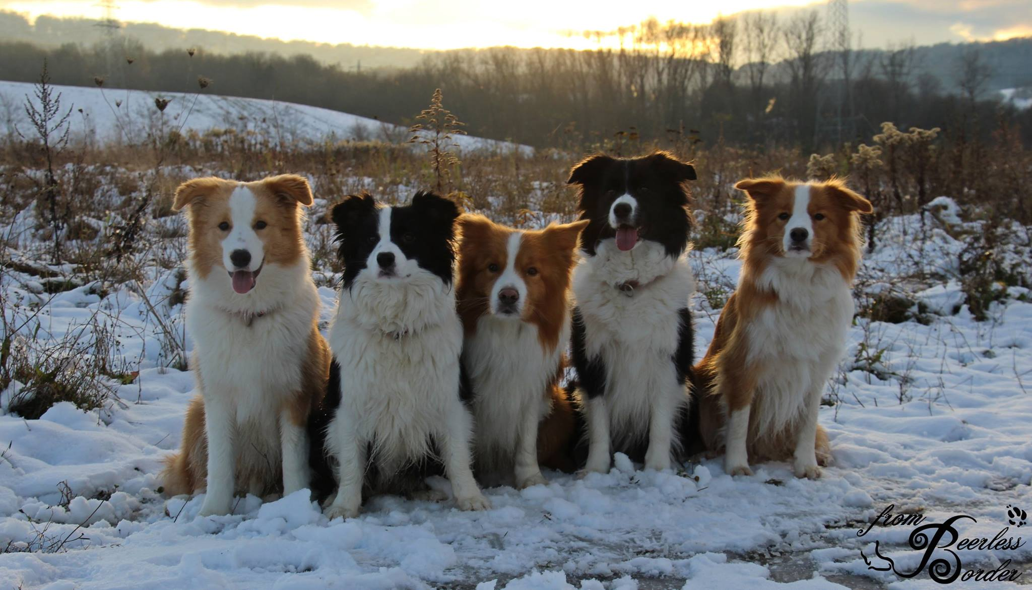Bubbles, Penny, Duke, Mama Lucy und Halbschwester Ayla