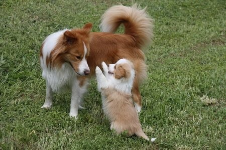 Duke mit seinem Sohn