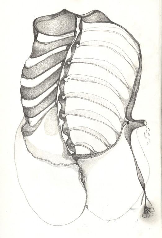 """""""Vénus anatomique"""", 2001, 17x25,  mine de plomb sur papier  ©"""