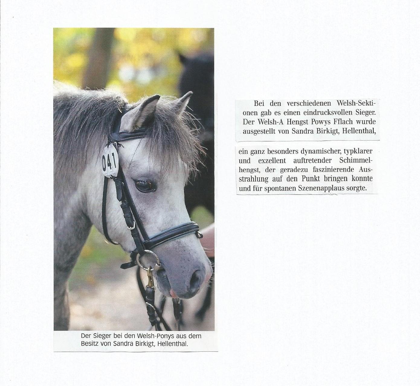 aus Rheinlands Reiter + Pferde Dezember 2014