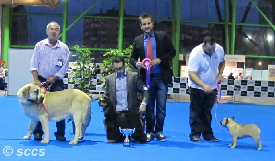 Concurso Canino Bis Jovenes