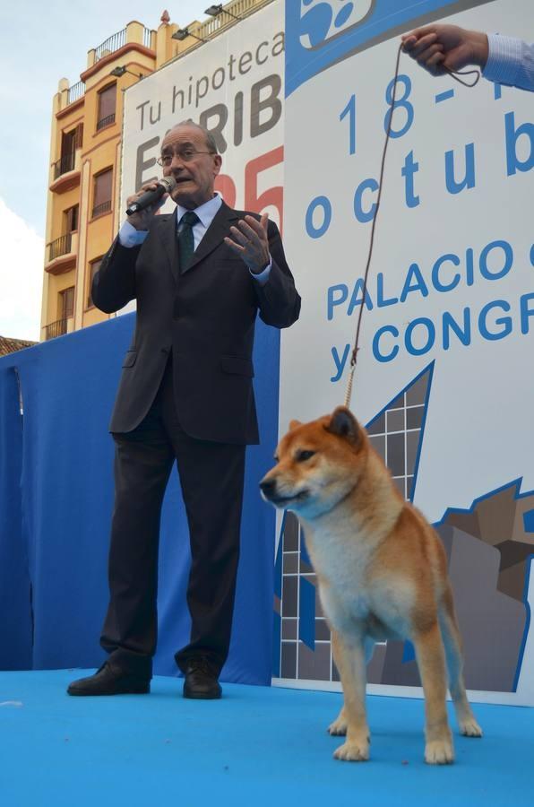 Don Francisco de la Torre, Alcalde de la Ciudad de Málaga