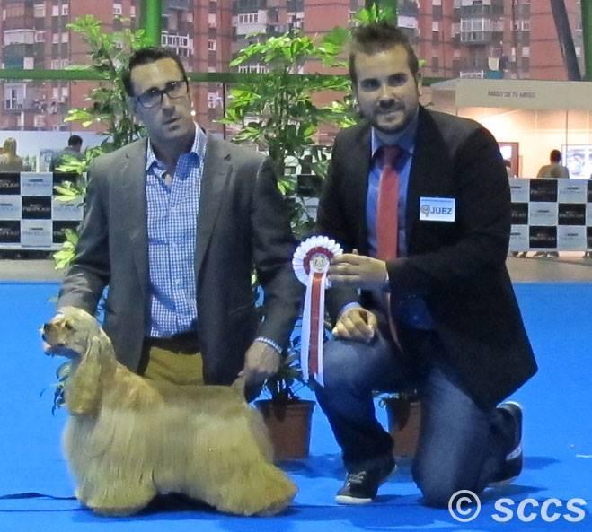 Concurso Canino Mejor Ejemplar Grupo 8