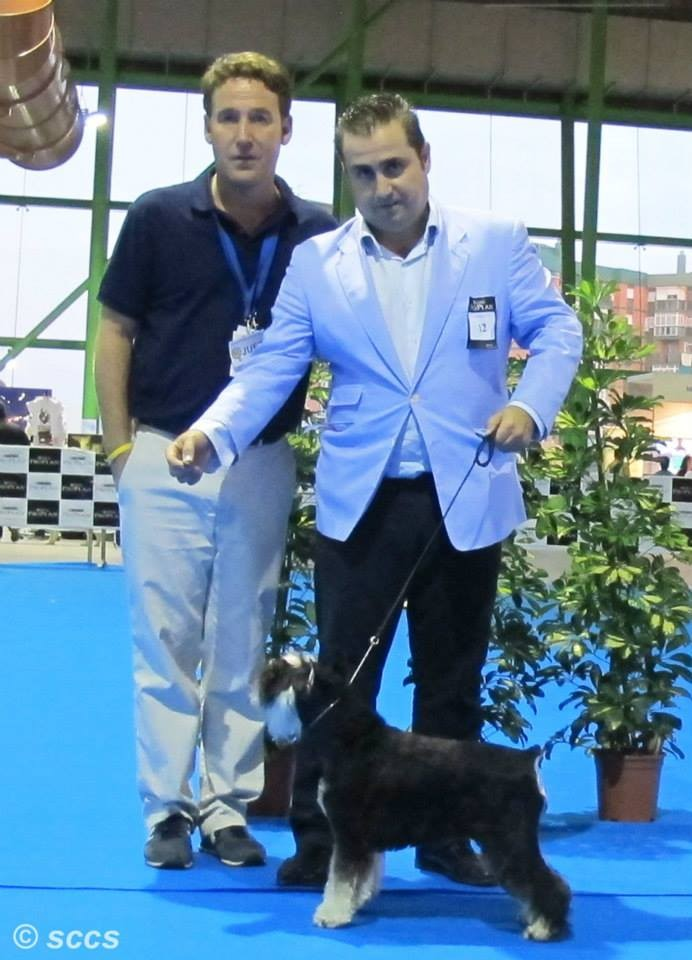 Concurso Canino Mejor Ejemplar Grupo 2