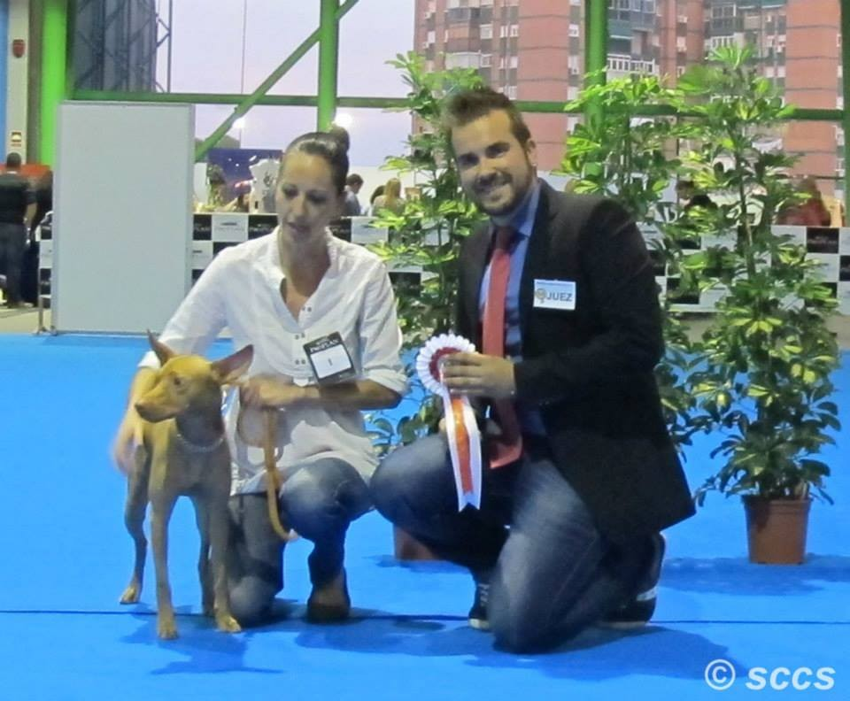 Concurso Canino Mejor Ejemplar Grupo 5