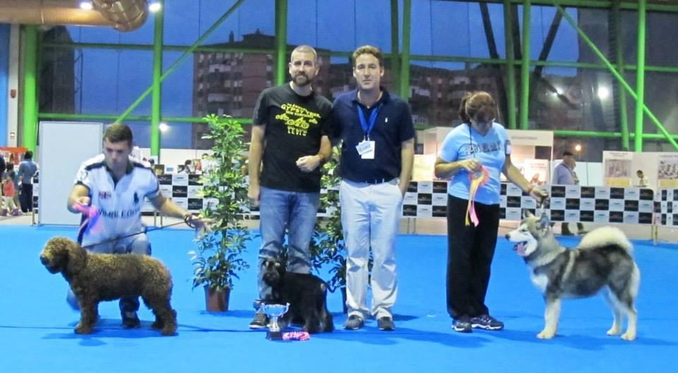Concurso Canino BIS Cachorros