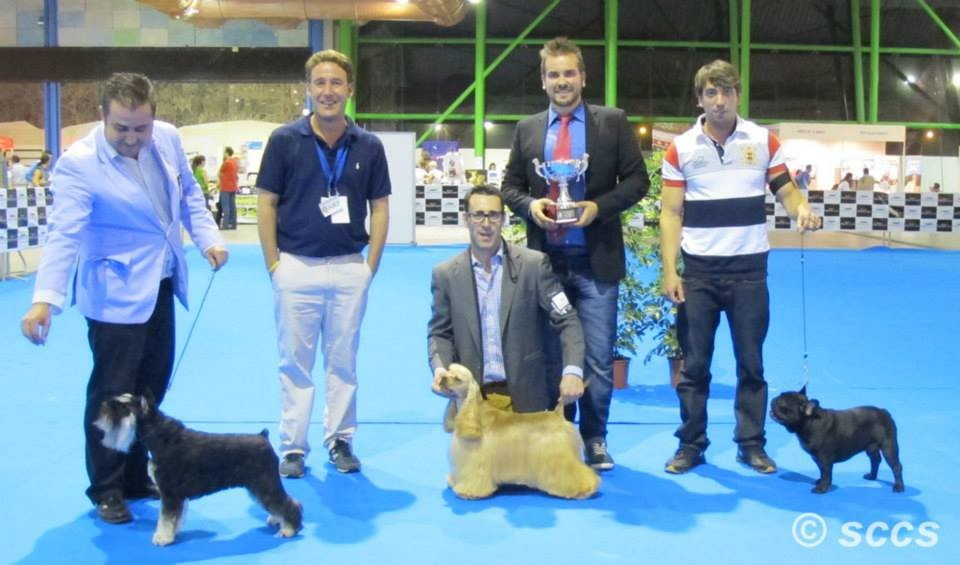 Concurso Canino Best in Show