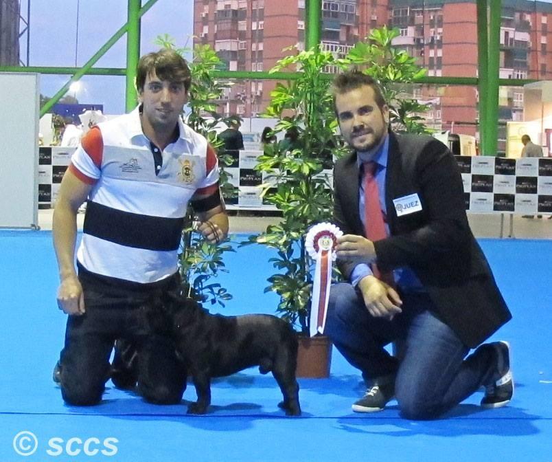 Concurso Canino Mejor Ejemplar Grupo 9