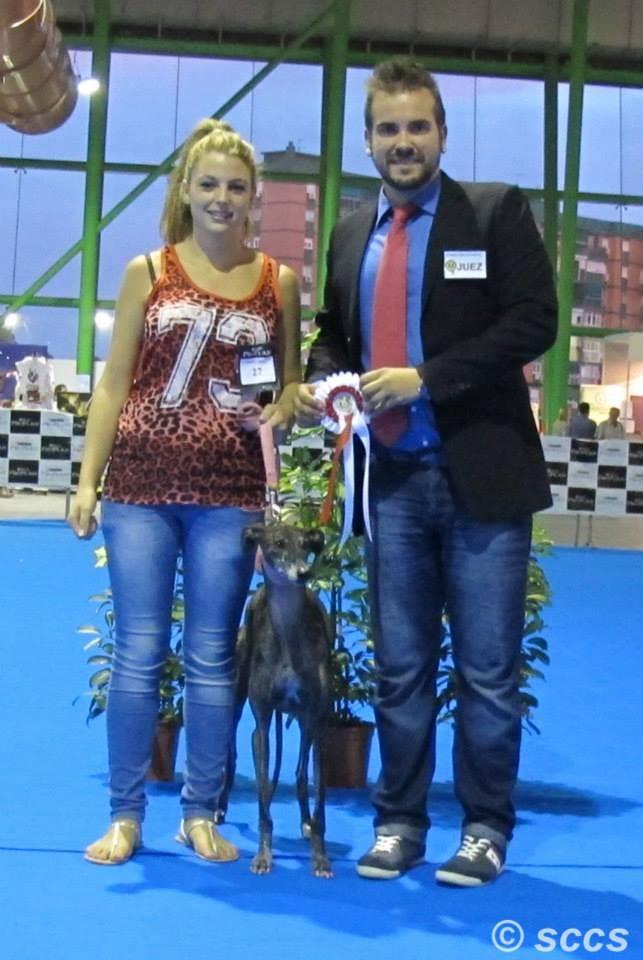 Concurso Canino Mejor Ejemplar Grupo 10