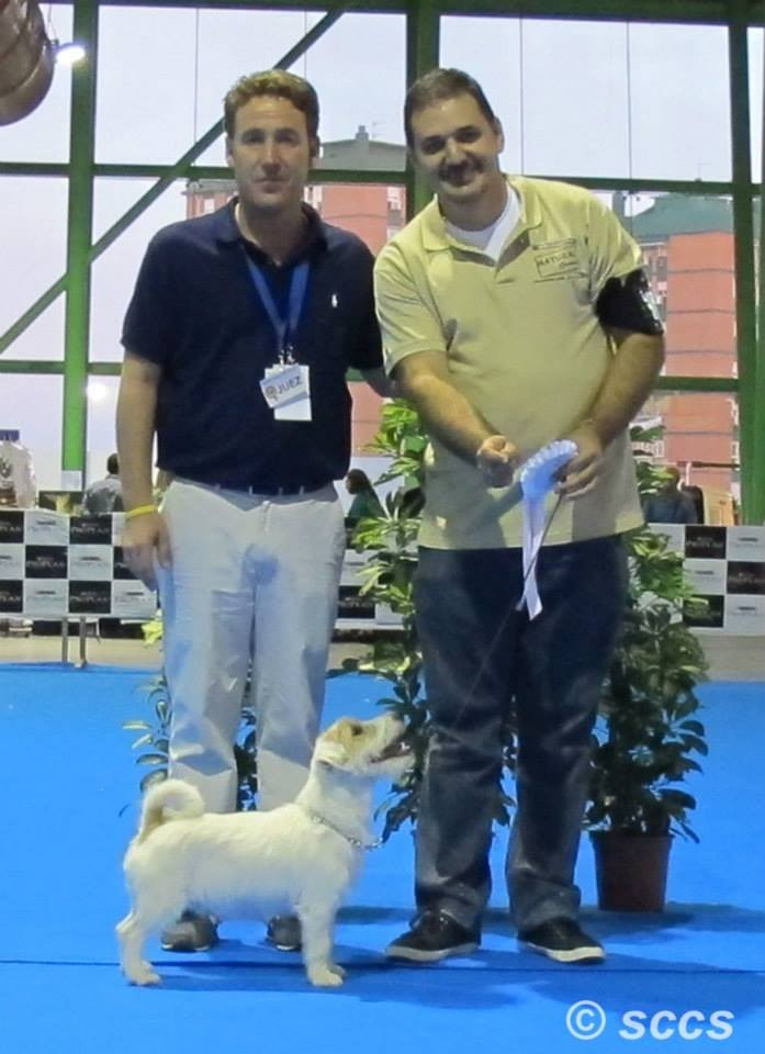 Concurso Canino Mejor Ejemplar Grupo 3