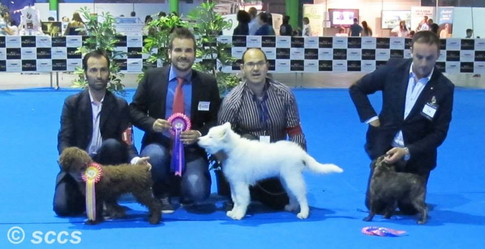 Concurso Canino Bis Baby