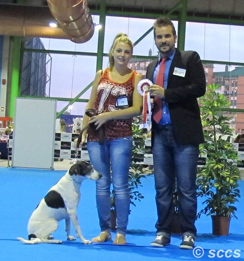 Concurso Canino Mejor Ejemplar Grupo 6