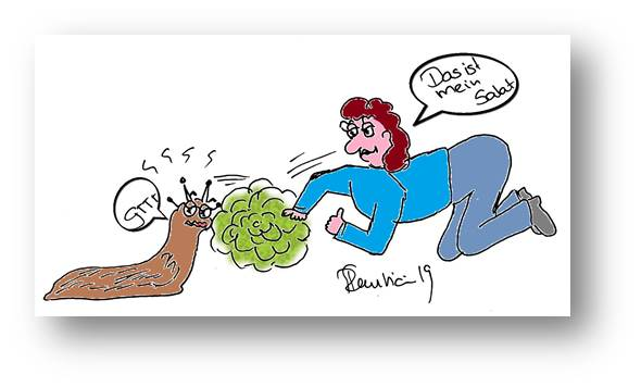 Wenn Schnecken uns den Salat wegfressen