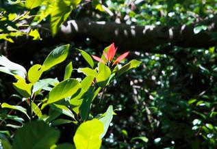 自然豊かな御蔵島の森