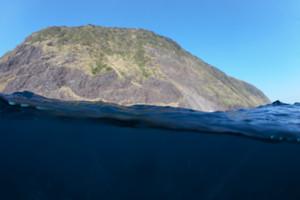 イルカの棲む自然豊かな利島の海