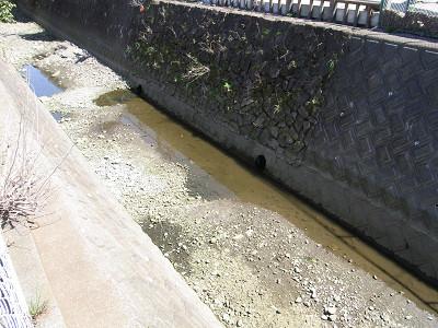 中原橋から下流、環流水の吐口