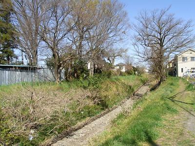 入曽橋下流 両岸の河畔樹