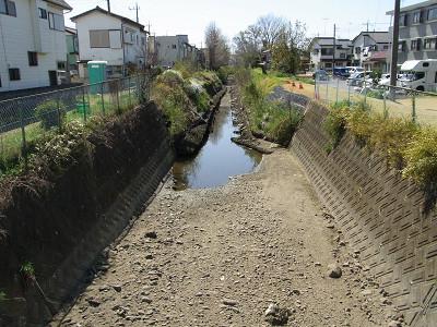 新入曽橋から上流 水たまりでカワセミがダイブ