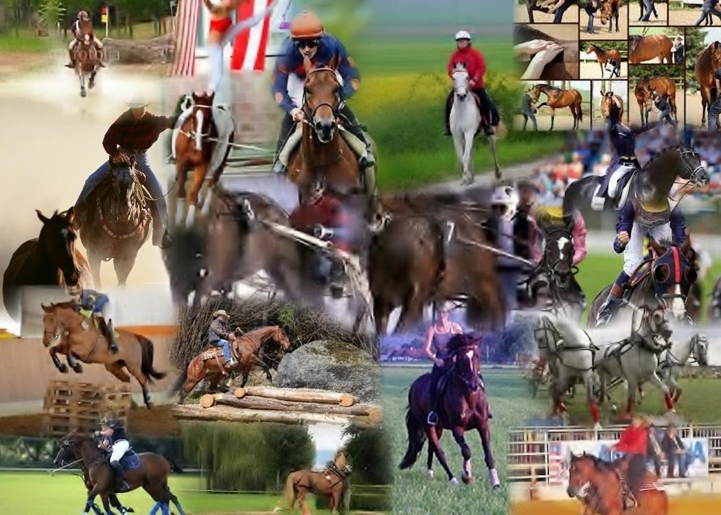 offen für Pferde aller Diszeplinen